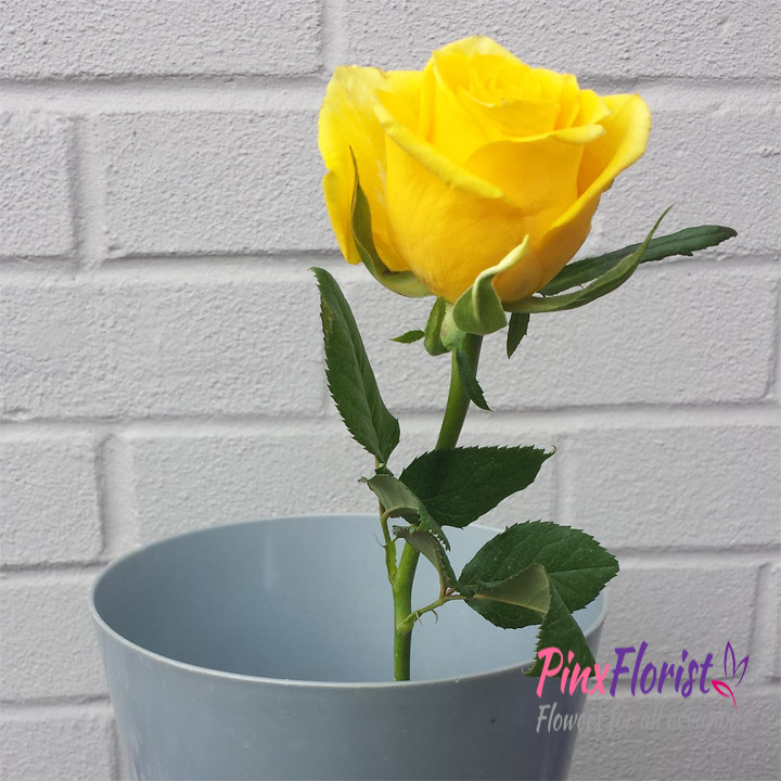 How to revive a drooping rose Pinx Florist Winchester Flowers