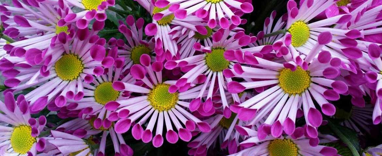 florist_winchester_flowers_slide_1